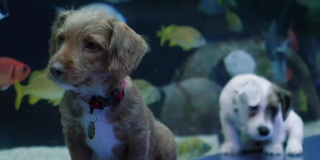 This Aquarium May Be Closed to the Public but Puppies Are Still Visiting