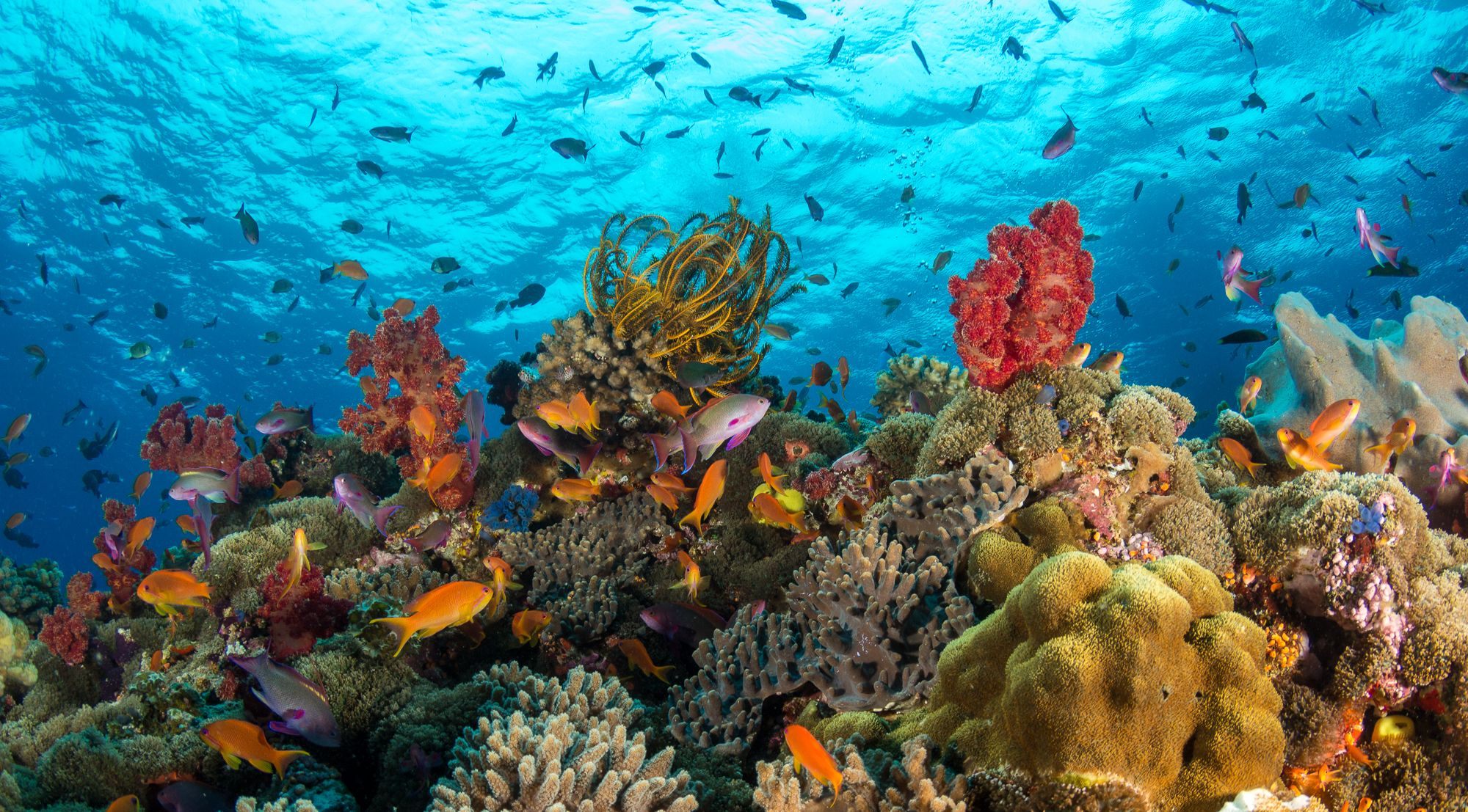 A colorful underwater image of an ocean's reef
