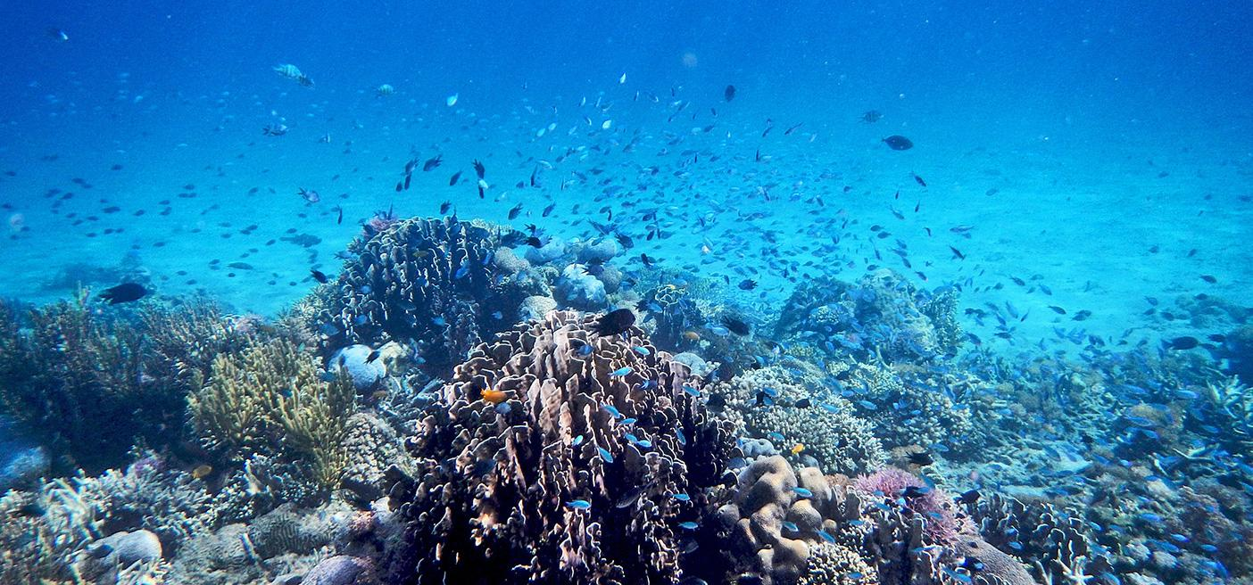 A picture of a dying coral reef