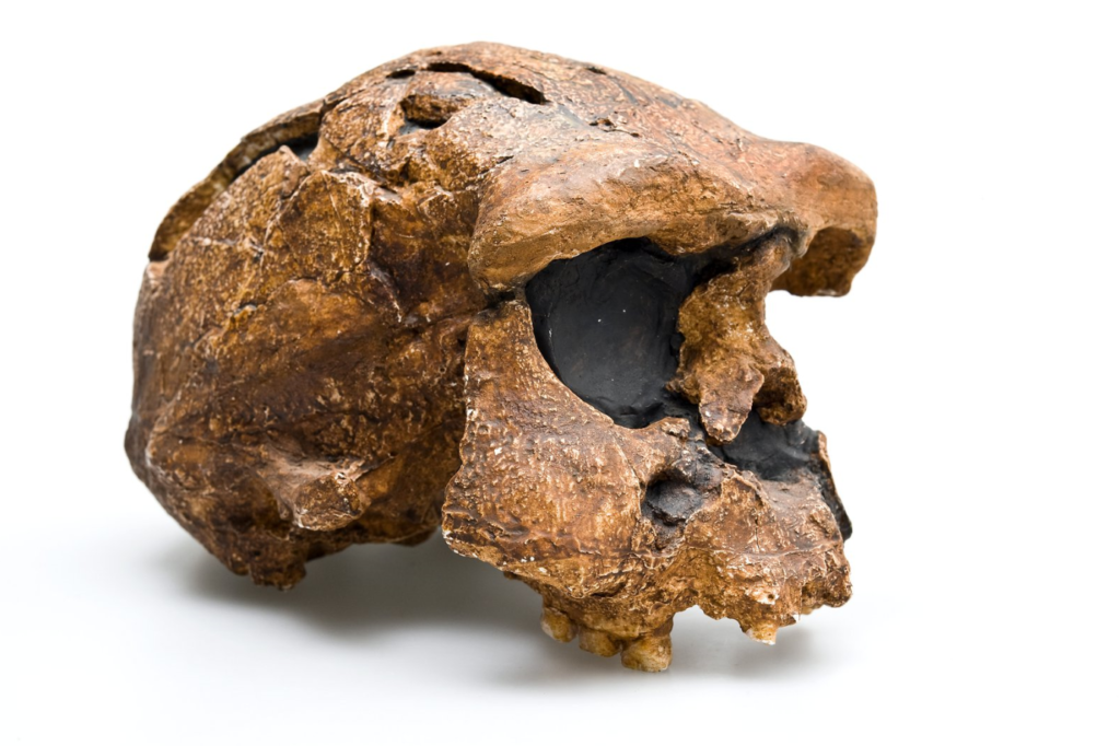 New Studies Reveal Intriguing Details About Ancient Humans