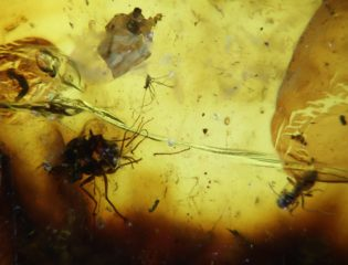 Ancient amber from the supercontinents of Southern Pangaea and Southern Gondwana
