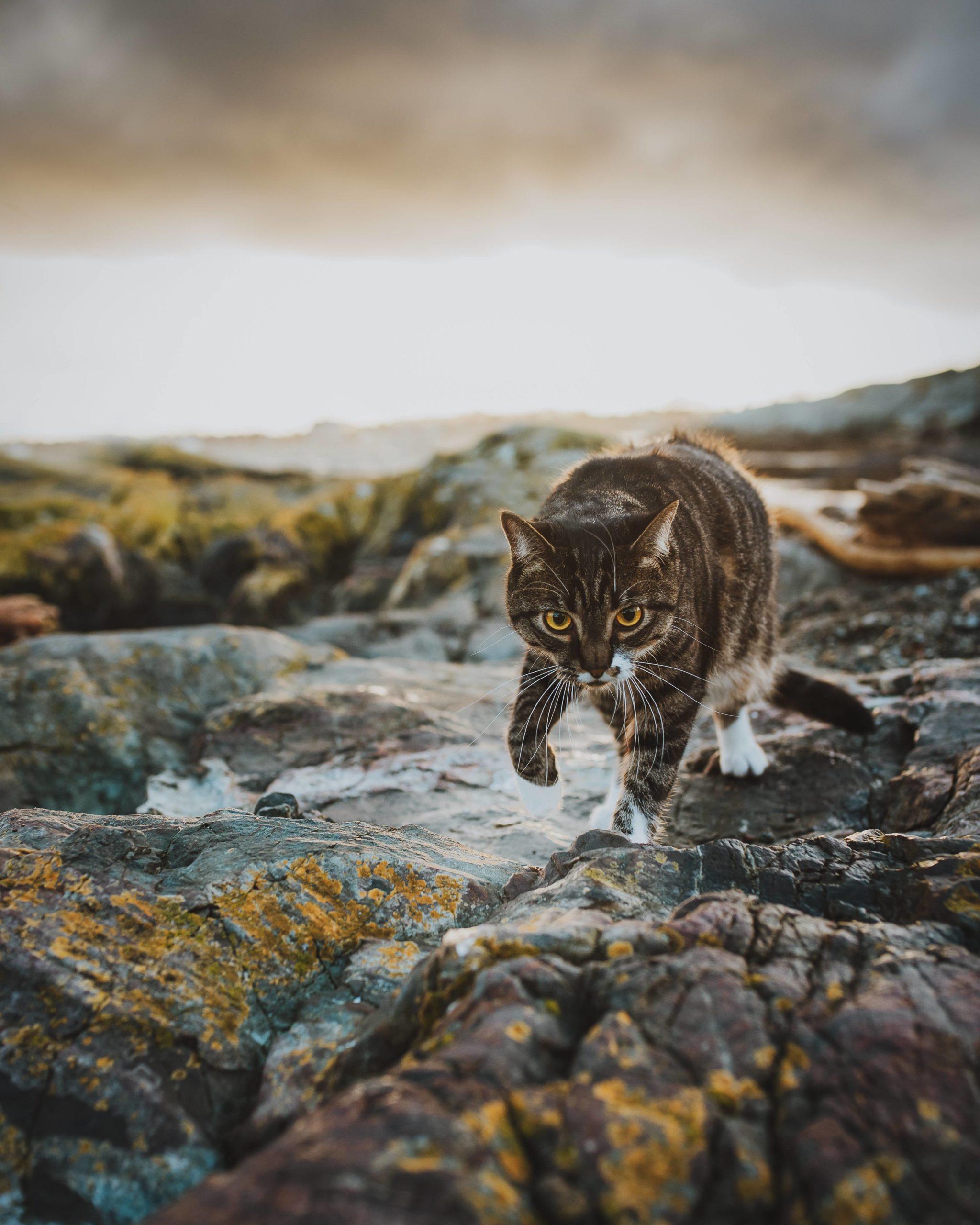 The cat Kazmir