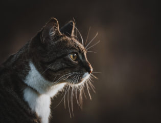 A $130 Cat Photoshoot Is Worth it, According to One Woman